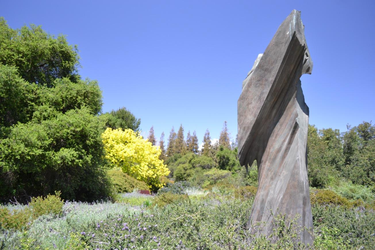 ancient bristlecone pine sculpture