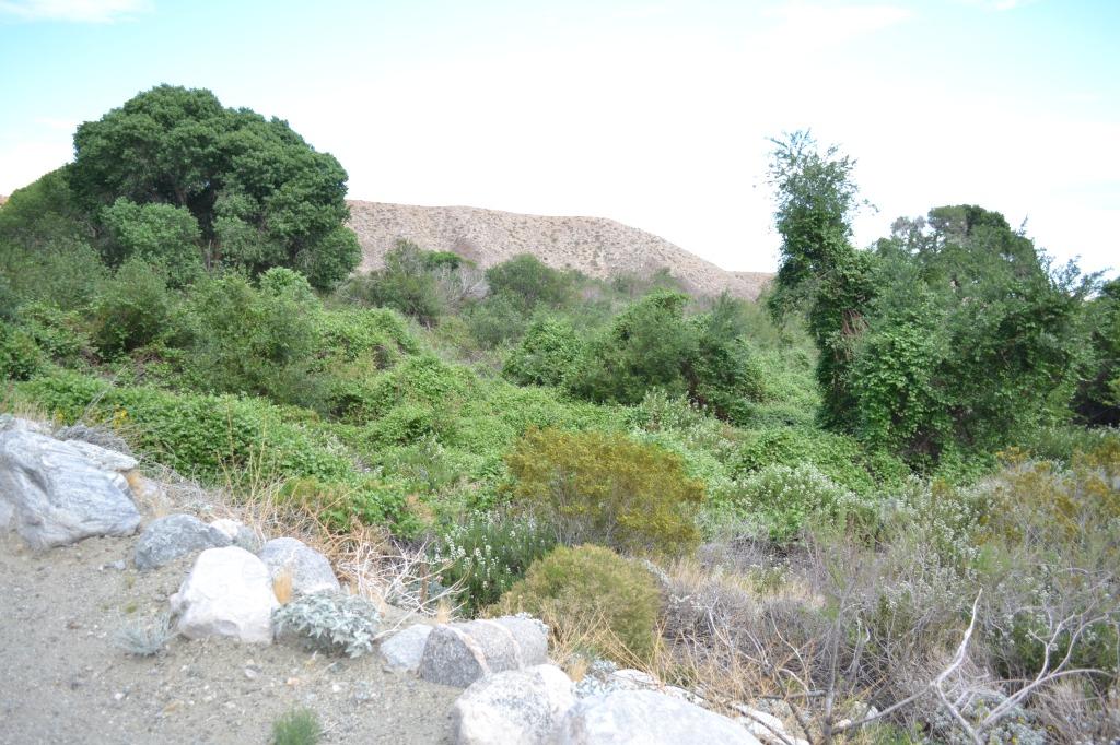 riparion habitat