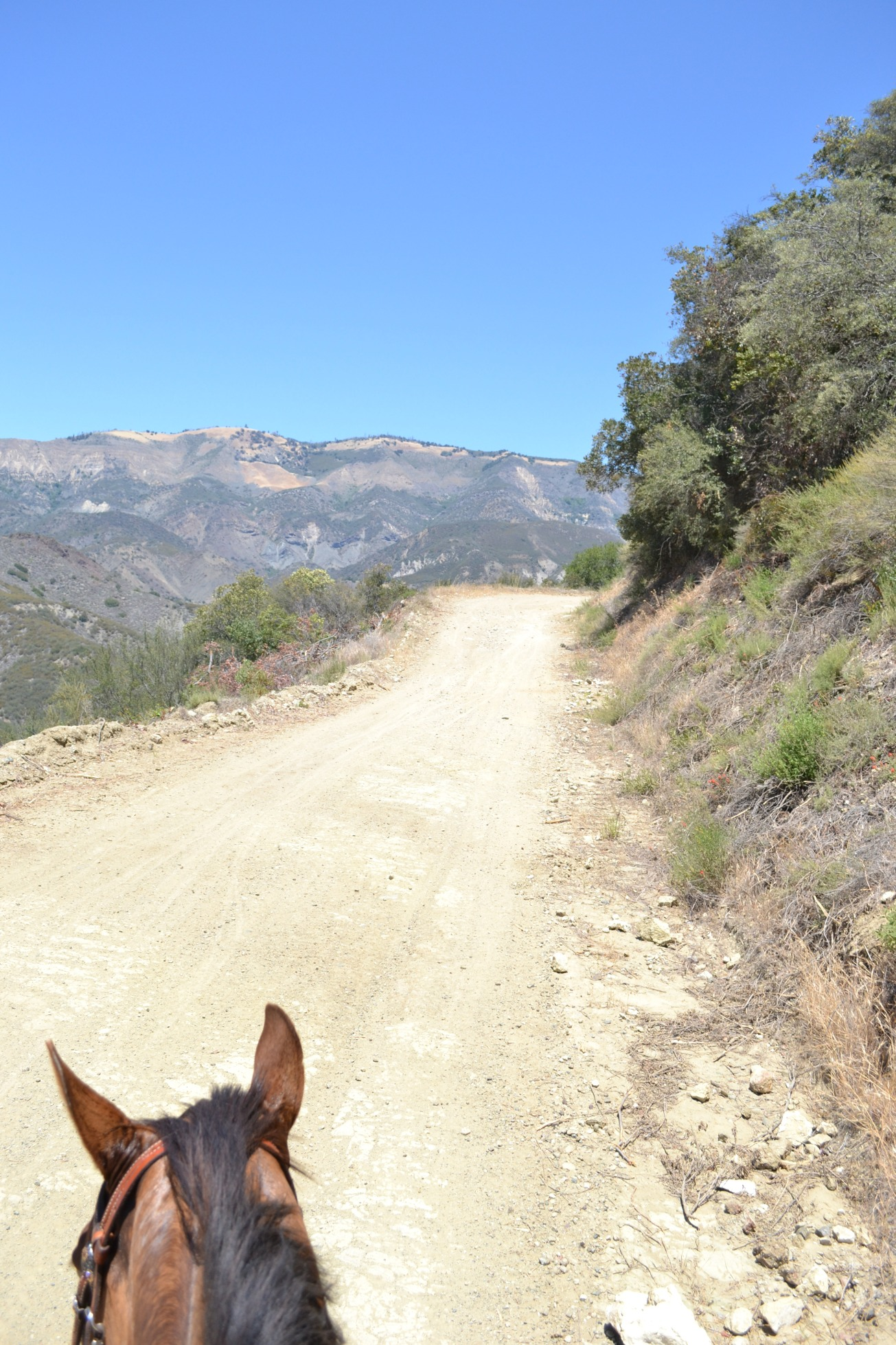 Camuesa Road Connector Trail, horses, trail riding, Rancho Oso trails