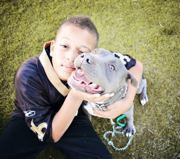 blue nose pit bull, boy and dog, pet photography, people and pets