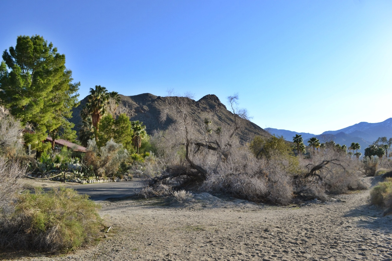 dog hike, Palm Springs