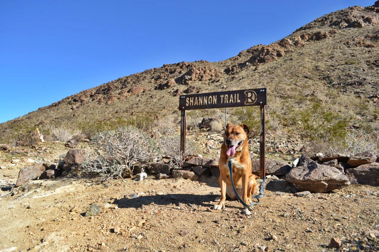 Chloe, Desrt Hike, Shannon Trail, Palm Springs