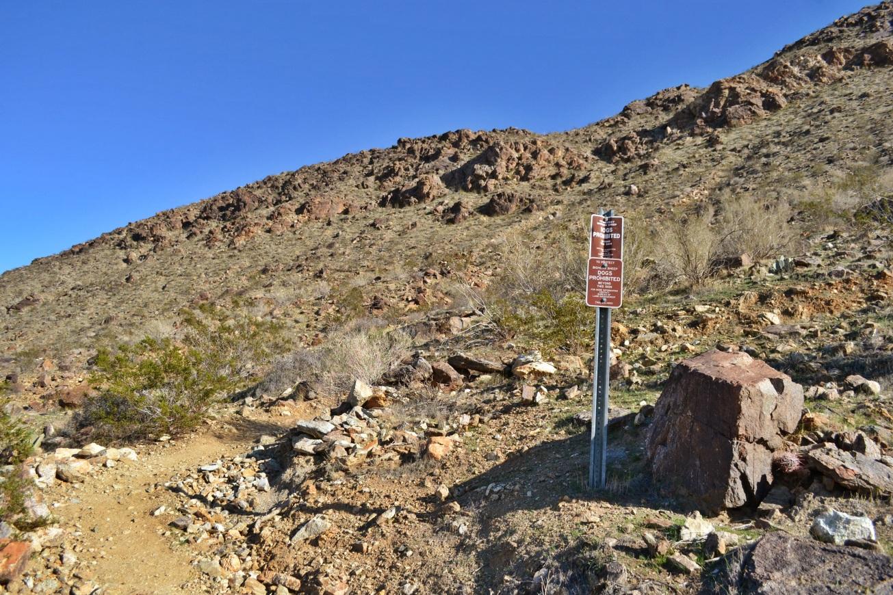 Big Horn Sheep, desert hike, Palm SPrings, Santa Rosa Mountains, hikes, Henderson Trail, hannon Trail, Garstin Trail