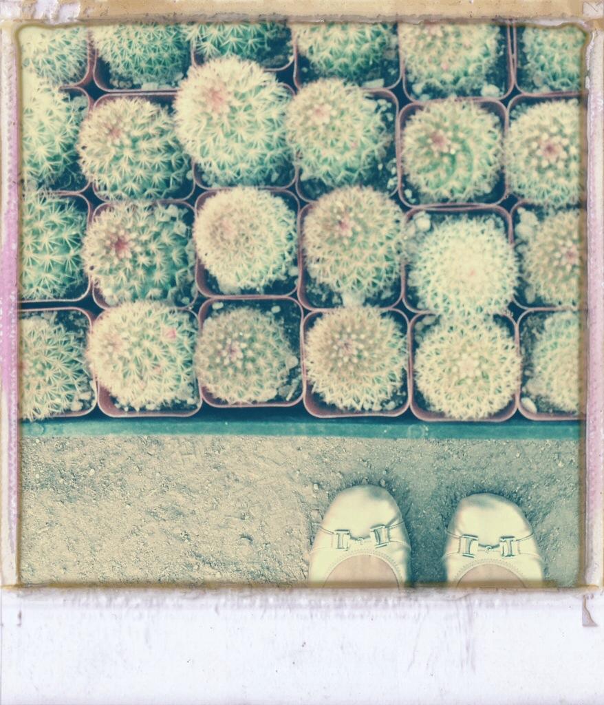 cactus, cactus garden, desert landscaping